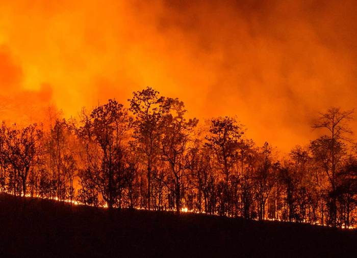 Pope sends blessing to victims of California wildfires