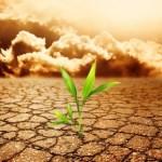 Scarcityplant