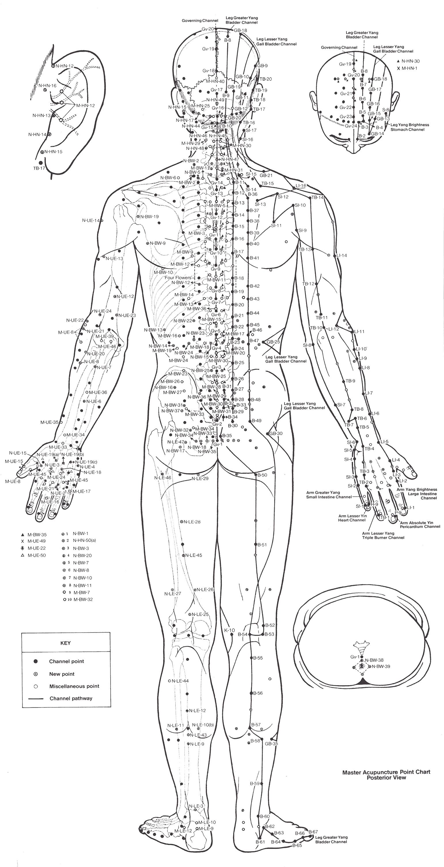 Acupuncture Point Chart Back