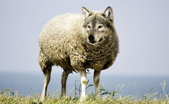 Churches Education Commission rebrands to Life Choices - a wolf in sheep's clothing