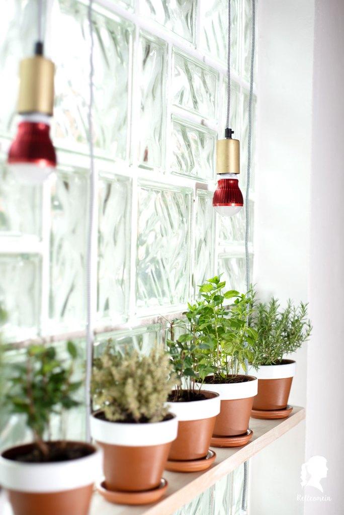 WERBUNG für Venso Pflanzenlicht  - Kräuter überwintern - Pflanzen richtig überwintern | relleomein.de #garten #kräuter #überwintern