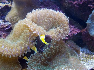 National Aquarium - An wen erinnert euch das?