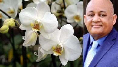 Photo of Ministerio de Educación licita compra de orquídeas por casi RD$700 mil pesos