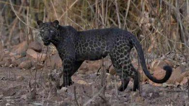 """Photo of Hombre en EU paga por """"experiencia"""" con leopardo que lo ataca salvajemente"""