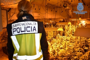 Photo of Detienen a cinco dominicanos en España por distribuir marihuana
