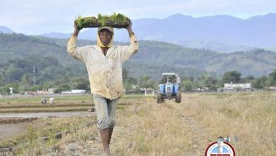 Photo of Desautorizan alzas en el precio del arroz