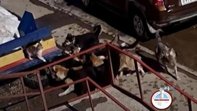 Photo of ¡Insólito! Un gato lucha solo contra una manada de perros (video)