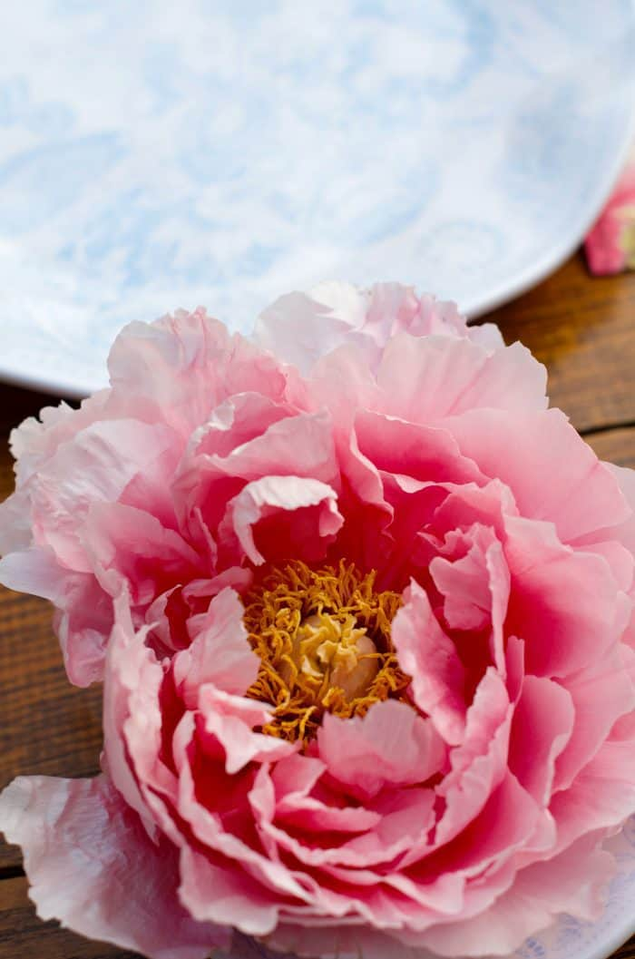 Peony - Entertaining: It's not about You, it's all about Them