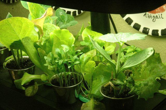 8 Money-Saving Tips on Gardening in the City - Aerogarden