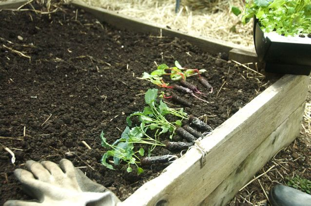8 Money-Saving Tips on Gardening in the City - Raised Beds