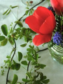 tulip & grape hyacinth tabletop | reluctant entertainer