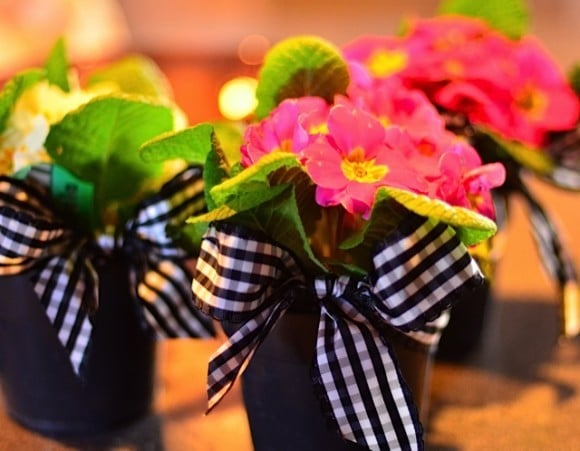 Primroses and checked ribbon