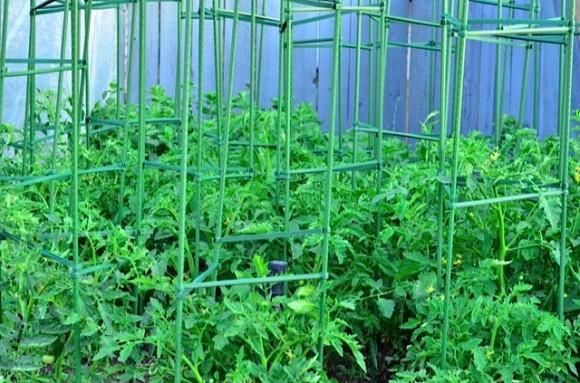 Avant Garden tomato cages