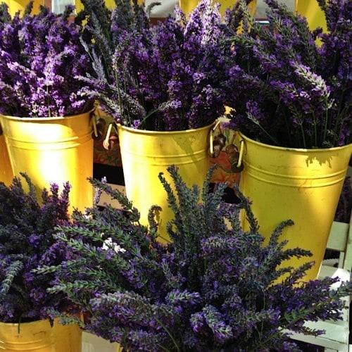Farmer's Market Lavender