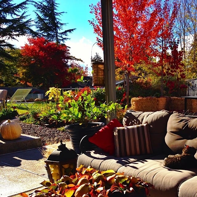 Oregon Fall Sunshine