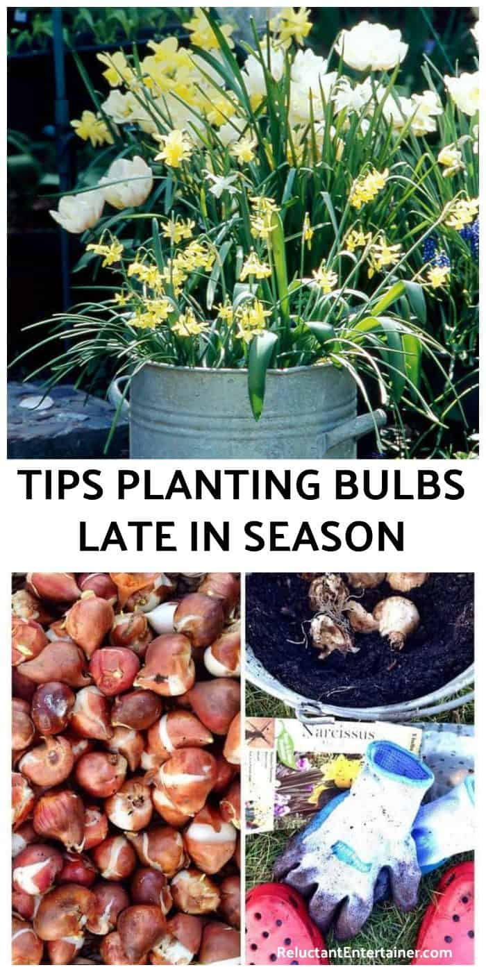 Tips Planting Bulbs Late in the Season