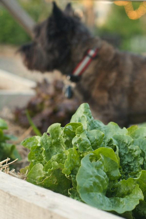 Gardening 2014