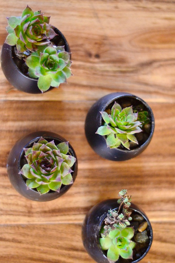 DIY Succulent Chalkboard Place Card Setting