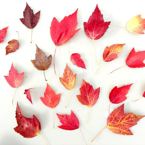 Colors of Fall at Reluctant Entertainer.com
