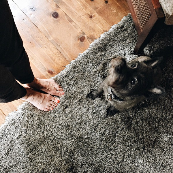 Cozy RugStudio Rugs for the Home