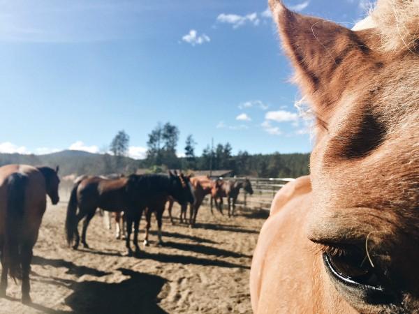 Sunriver horses