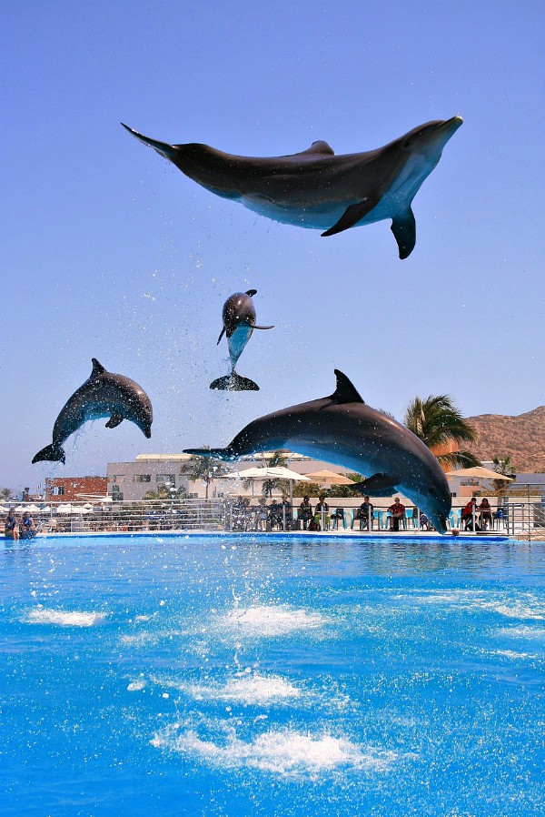 What to do in Cabo San Lucas, Mexico