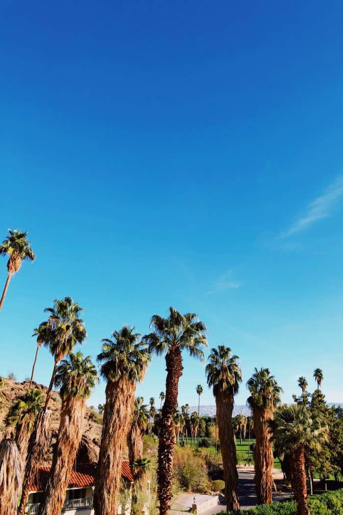 Palm Trees Kimpton Rowan Hotel Palm Springs CA