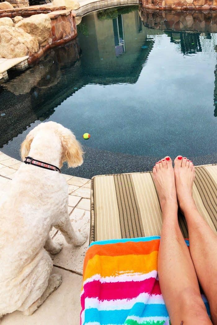 Arizona pool time with Tessie the Labradoodle