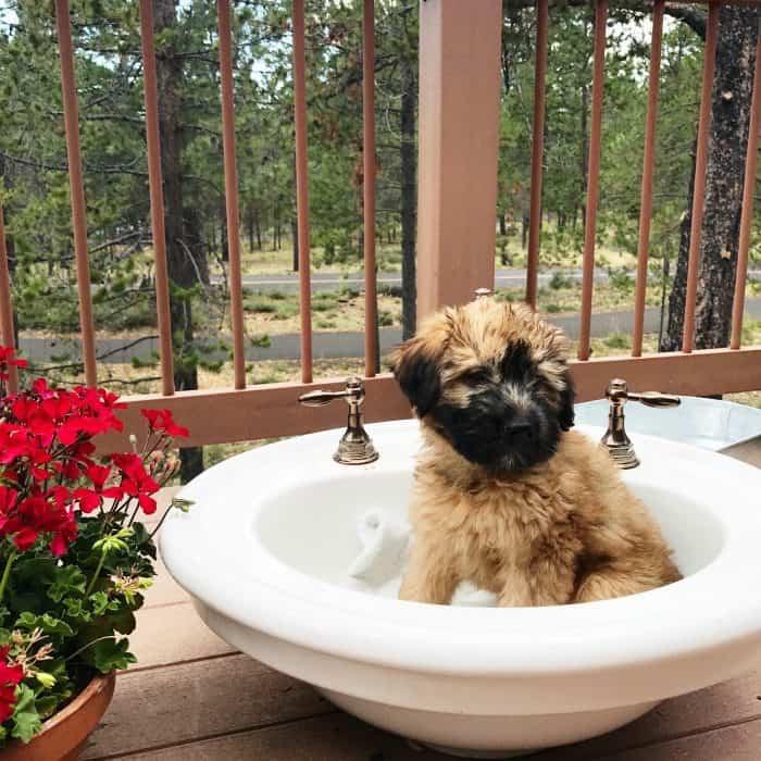 DIY Mountain Home Bathroom Remodel - sink