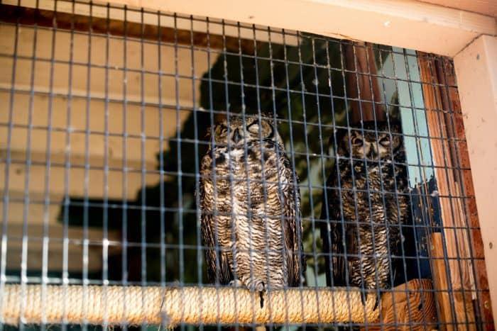 Dawn Wildlife Morning at Sunriver Nature Center - owls