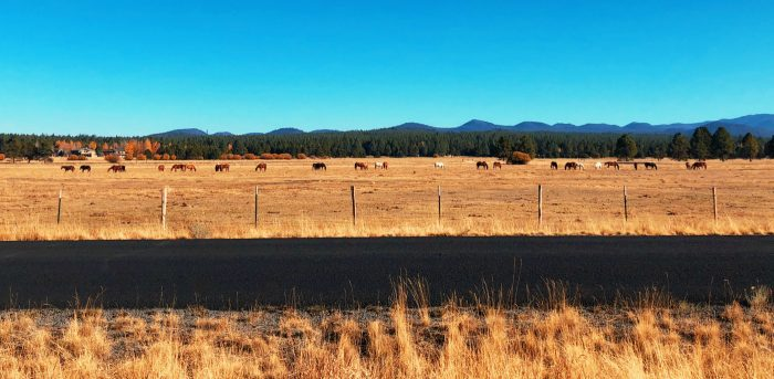 Sunriver Resort - horses