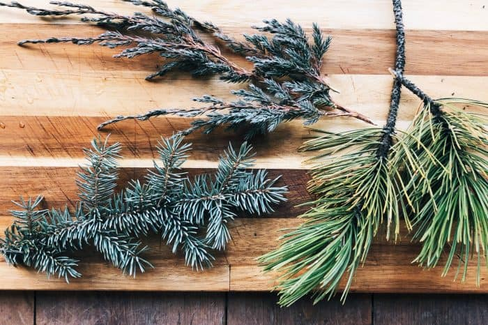 Pine - Stove-top Yuletide Potpourri Recipe
