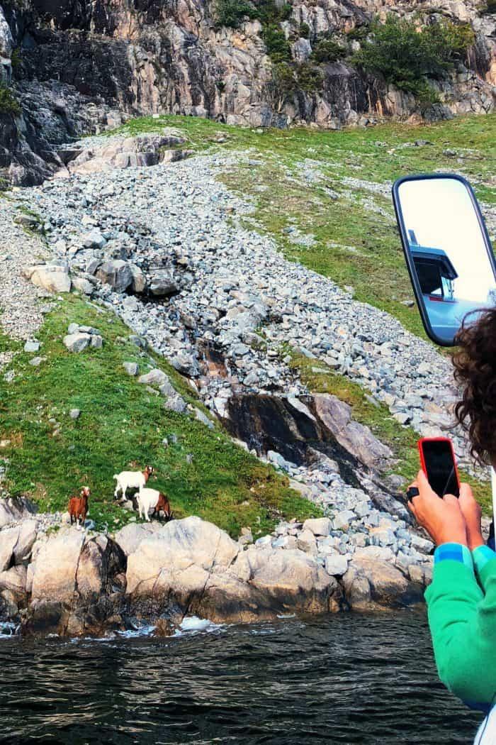 Homelands Viking Cruise Excursions Norway - wildlife