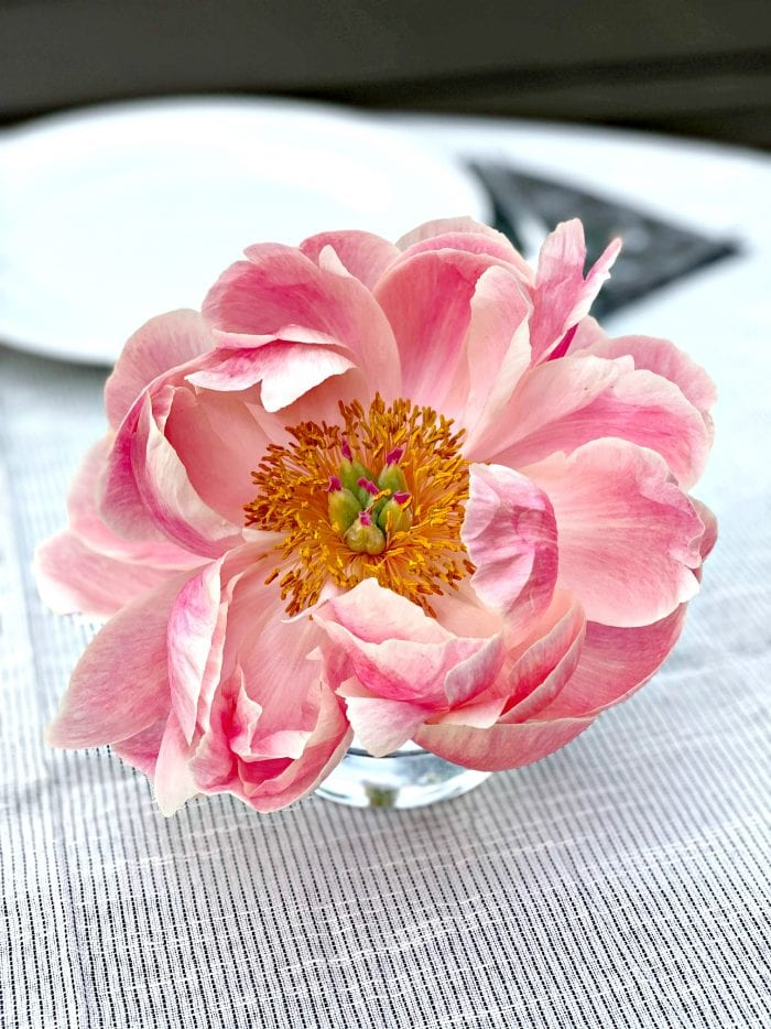 one baby pink peony in a vase