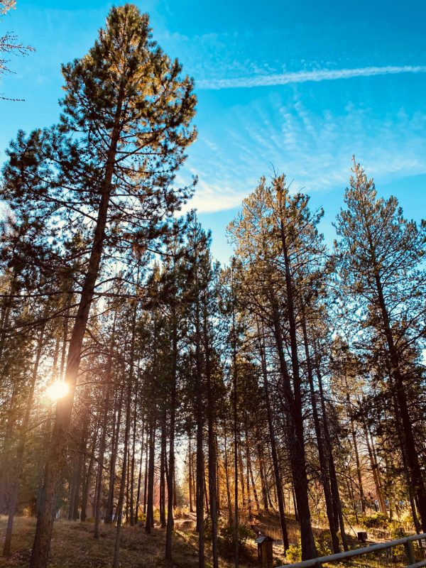 trees with sunlight at Sunriver Resort