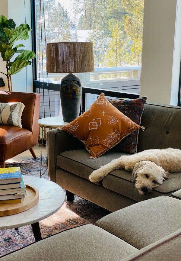 whoodle dog laying on sofa