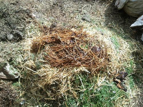 Alt Bokashi Bucket Burying (4/4)