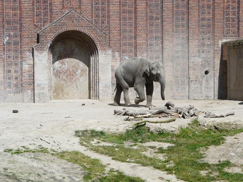 Die Bewegungsabläufe der Elefanten rufen einem die dunklen Seiten eines Ortes, der nicht der natürlich Umgebung eines wilden Tieres entspricht, deutlicher als alles andere ins Gedächtnis. Repetitiv, geistesabwesend und [...] - Ice Age-Manni hat definitiv mehr zu lachen.