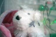 Der allererste Kunde des Hundesalons an der Haltestelle Lutherstraße wurde präpariert und im Schaufenster ausgestellt.