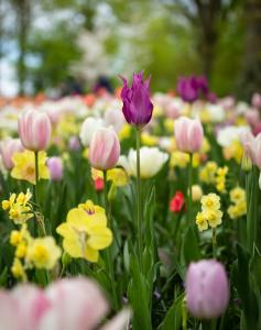 Spring Flowers mean Selling Your Home