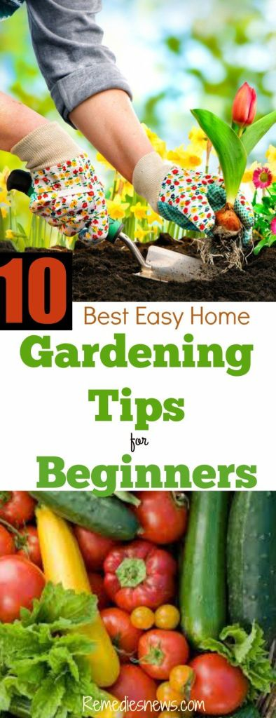 Easy Home Vegetable Gardening Tips for Beginners