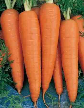 Danvers Carrots