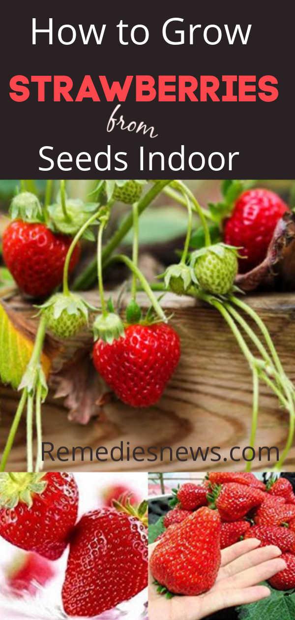 Best Ways to Grow Strawberries from Seeds Indoor