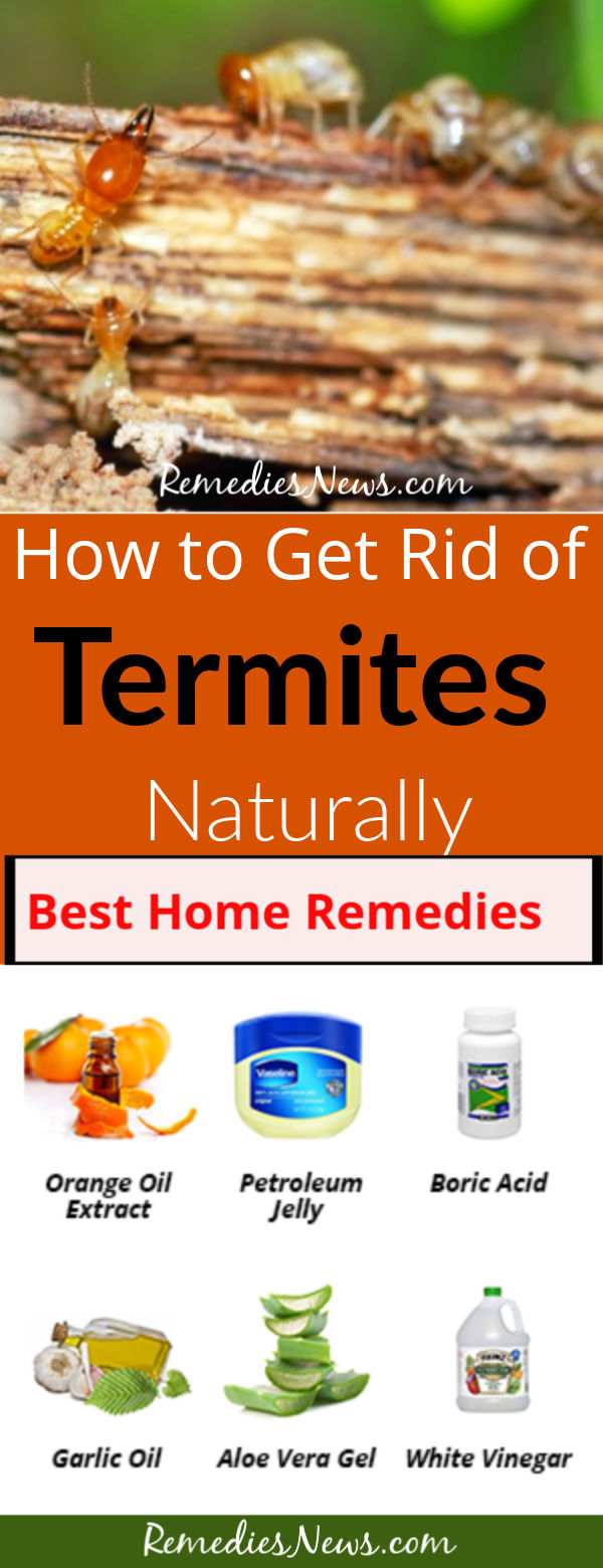 How to Get Rid of Termites Naturally: 9 Best DIY Home Remedy