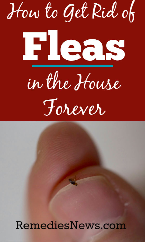 HOW TO GET RID OF FLEAS NATURALLY FAST WITH 11 HOME REMEDIES