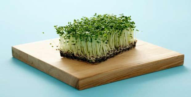Lo mejor del brócoli