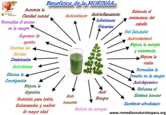 beneficios-de-la-moringa-03