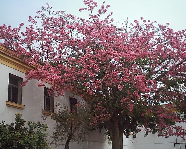 Me gustan los árboles de Málaga...y las flores (1/6)