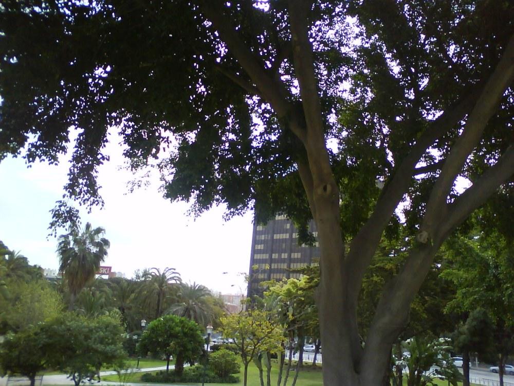 Me gustan los árboles de Málaga...y las flores (6/6)