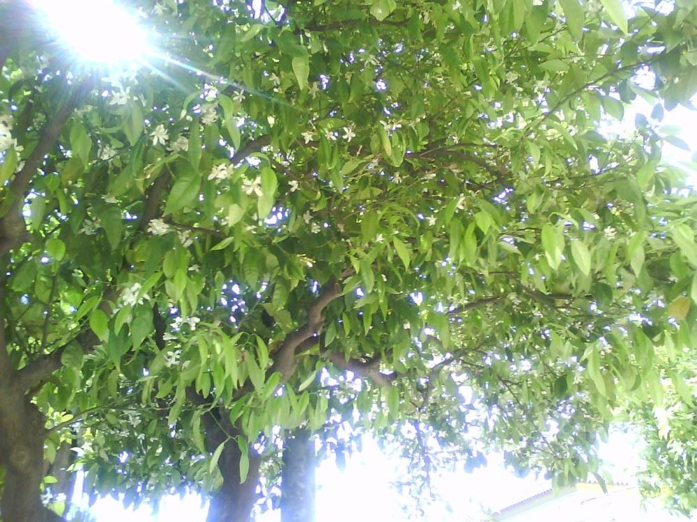 Me gustan los árboles de Málaga...y las flores (2/6)